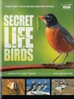 野鳥放大鏡 (The Secret Life of Birds)