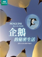 企鵝的秘密生活 (Penguins Spy In The Huddle)[台版]